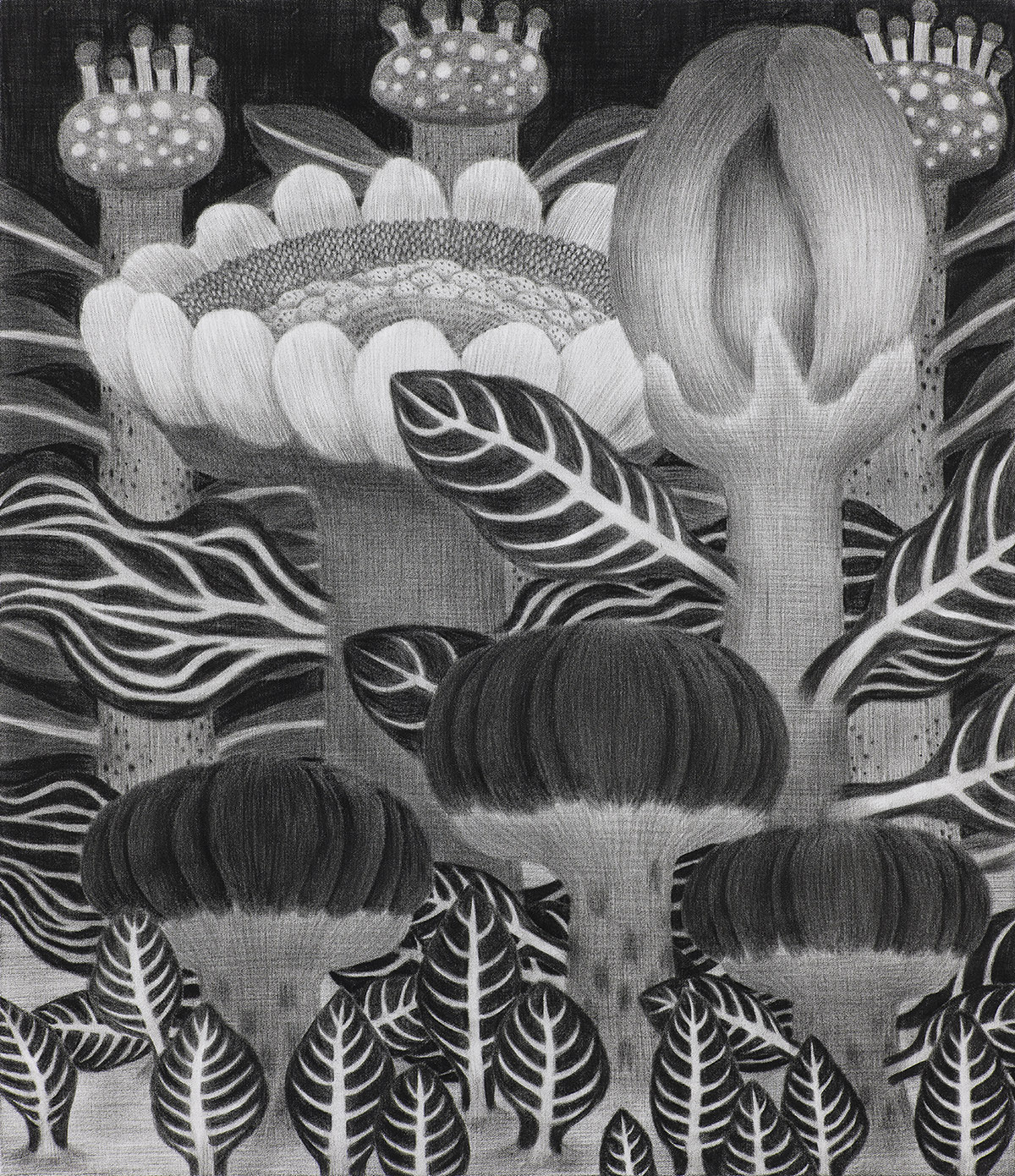 [20p2609] 2020_식물숲 #1_conte on daimaru_53.0×45.5.jpg