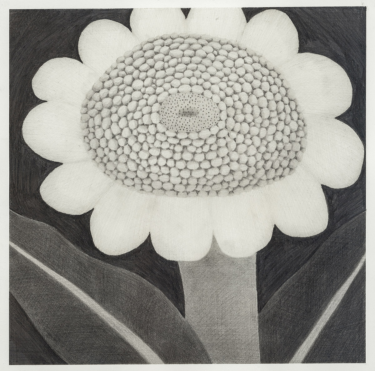 [20ds1031] Drawing_pencil on paper_30×30_2020.jpg