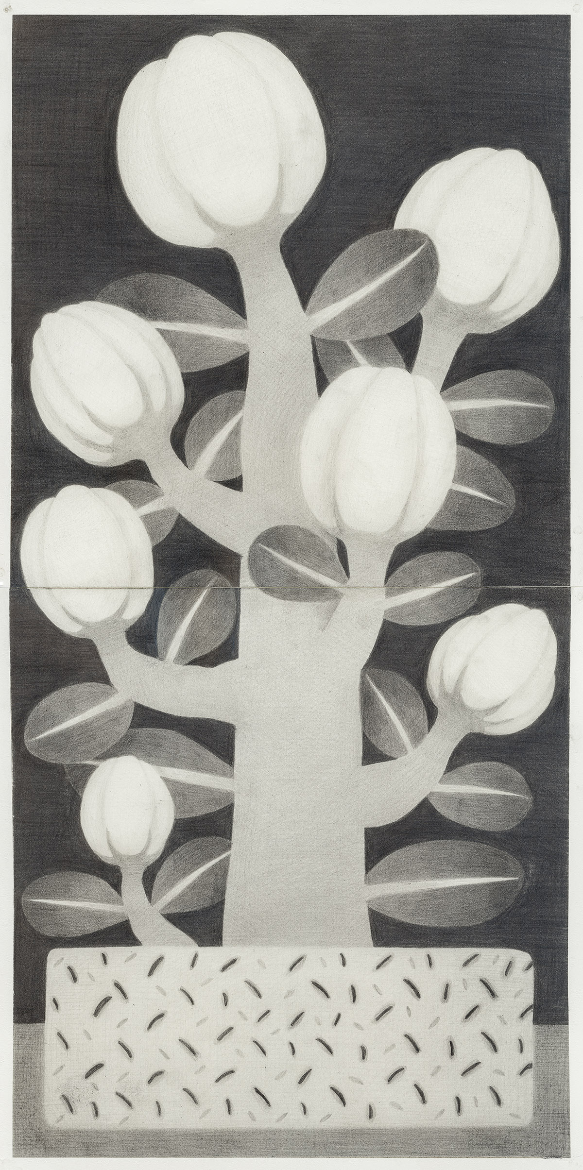 [20ds1039] Drawing_pencil on paper_60×30_2020.jpg