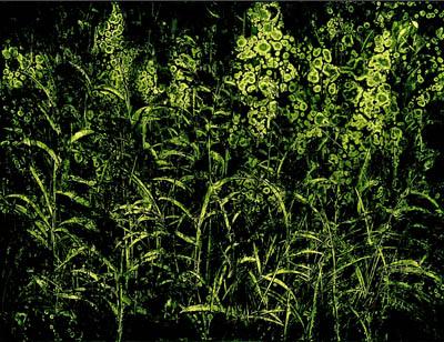 석철주_들꽃이야기,50x65cm,캔버스,먹,아크릴릭,2009.jpg