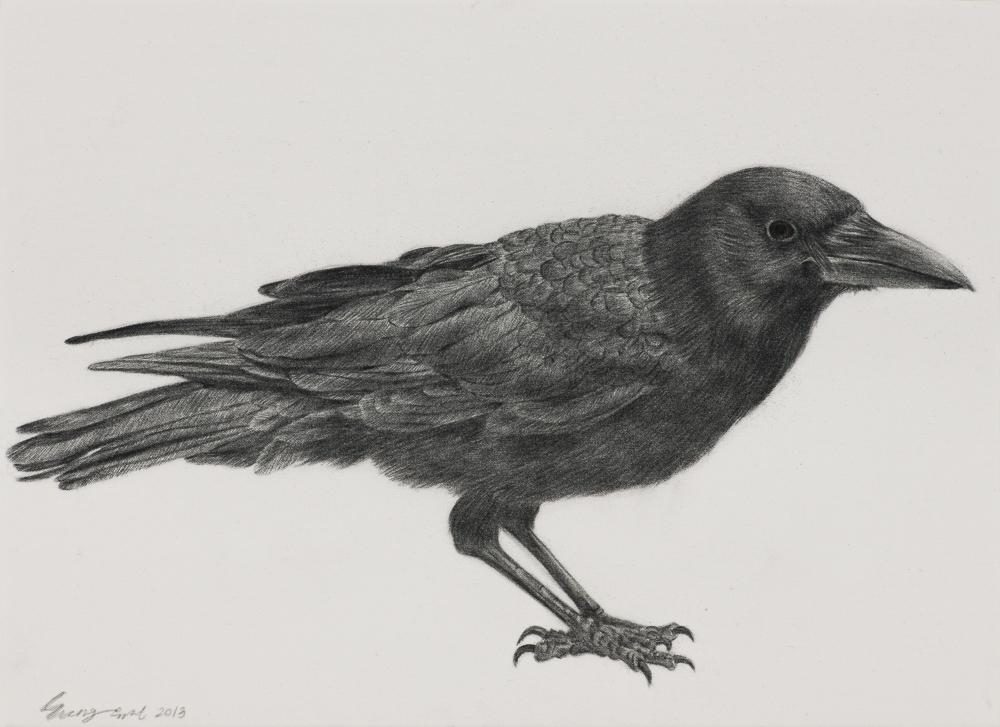 [13p1759] black bird_conte on daimaru_24.2×33.4_2013.jpg